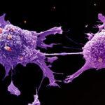 Ljudska bića su bolest, rak ove planete