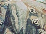 smrznuta-riba-predrag-trokicic
